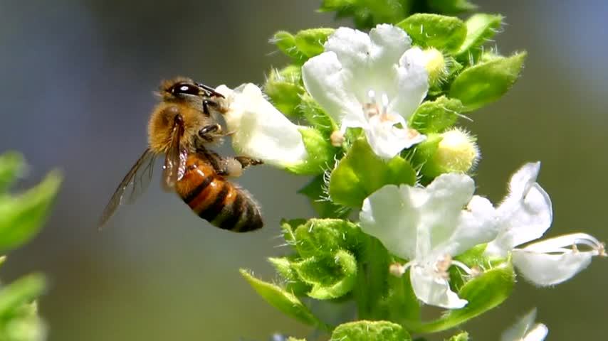 Bees 1_83510090-159532