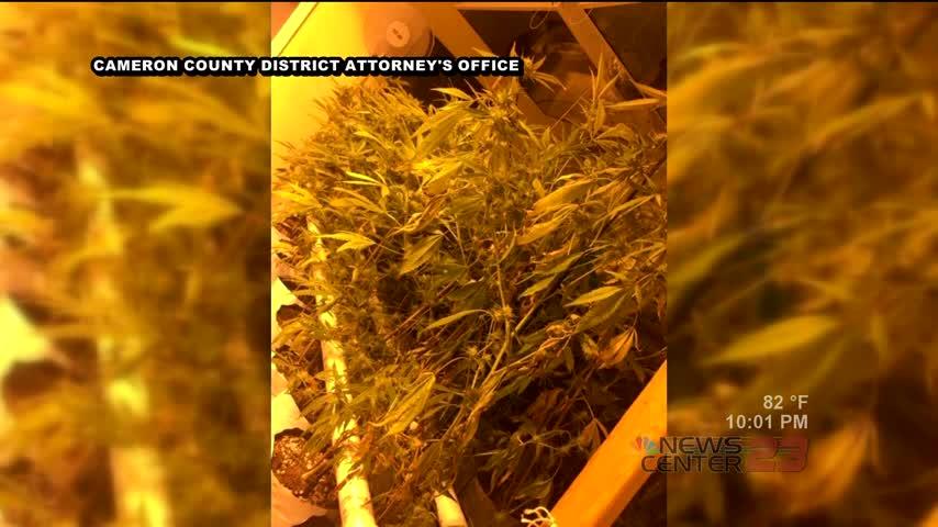 Hydroponic Marijuana Bust in Cameron County_57438727-159532