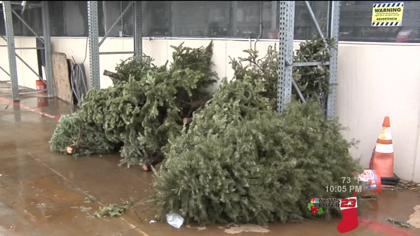 Brownsville to Recycle Christmas Trees_92837828