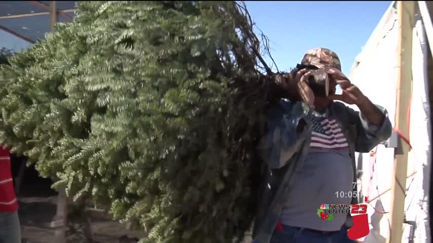 Proper Christmas Tree Disposal_39855958