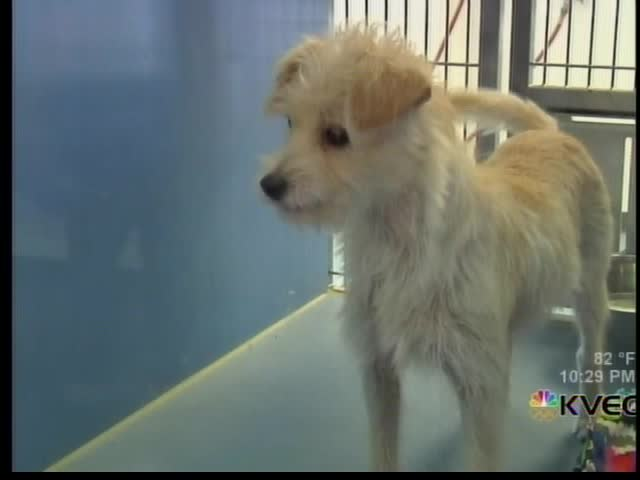 Clear the Shelters 2017_72941315