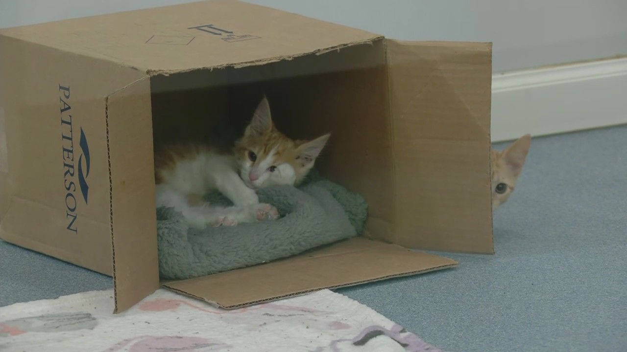 Cats get new housing portals at Palm Valley Animal Society